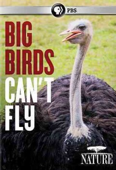 Big birds can't fly /  directed and produced by Mike Birkhead. - directed and produced by Mike Birkhead.