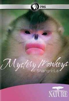 Mystery monkeys of Shangri-la /  author, Mark Fletcher ; directed by Jacky Poon & Wuyuan Qi ; produced by Xi Zhinong ... and others. - author, Mark Fletcher ; directed by Jacky Poon & Wuyuan Qi ; produced by Xi Zhinong ... and others.