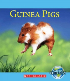 Guinea pigs - by Katie Marsico.