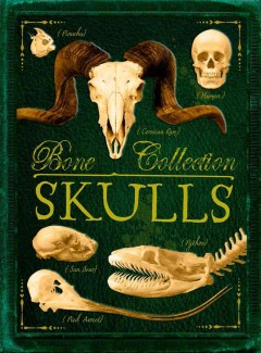 Bone collection. Skulls - written by Camilla de la Bédoyère ; illustrated by Sandra Doyle.
