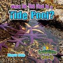 What do you find in a tide pool? /  Megan Kopp. - Megan Kopp.