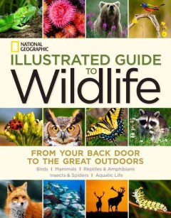 National Geographic illustrated guide to wildlife : from your back door to the great outdoors : mammals, birds, reptiles & amphibians, aquatic life, insects & spiders.