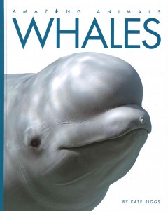 Whales - Kate Riggs.