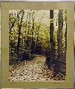 Blendon Woods /Dwight Kreischer. - Kreischer, Dwight.