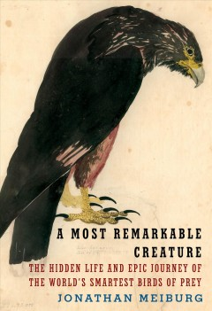 A most remarkable creature : the hidden life and epic journey of the world's smartest birds of prey / Jonathan Meiburg.