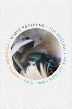 White feathers : the nesting lives of tree swallows / Bernd Heinrich.