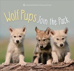 Wolf pups join the pack.