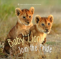 Baby lions join the pride.