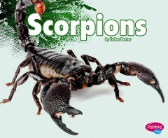 Scorpions /  by Esther Porter.