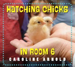 Hatching chicks in room 6 /  Caroline Arnold. - Caroline Arnold.