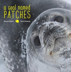 A seal named Patches /  by Roxanne Beltran and Patrick Robinson.