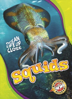 Squids /  by Nathan Sommer. - by Nathan Sommer.