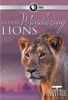 India's wandering lions /  produced by Ammonite Films & Kosmik Global Media Pvt. Ltd. in association with Earth Touch ; produced by Thirteen Productions LLC ; WNET Thirteen ; written and directed by Martin Dohrn, Praveen Singh. - produced by Ammonite Films & Kosmik Global Media Pvt. Ltd. in association with Earth Touch ; produced by Thirteen Productions LLC ; WNET Thirteen ; written and directed by Martin Dohrn, Praveen Singh.