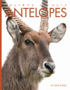 Antelopes /  by Kate Riggs. - by Kate Riggs.