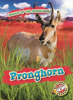 Pronghorn /  by Kaitlyn Duling. - by Kaitlyn Duling.