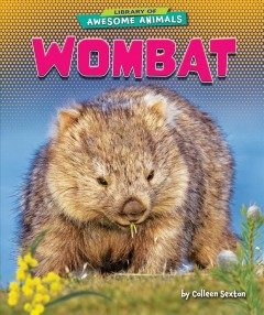 Wombat /  by Colleen Sexton. - by Colleen Sexton.