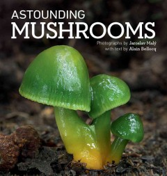 Astonishing mushrooms /  photographs by Jaroslav Malý ; with text by Alain Bellocq.