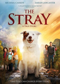 The stray /  written and directed by Mitch Davis.