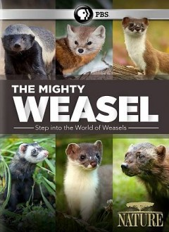 Nature: The Mighty Weasel.