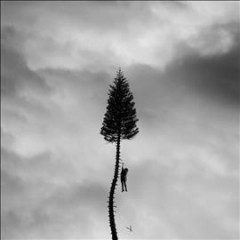 A black mile to the surface /  Manchester Orchestra. - Manchester Orchestra.