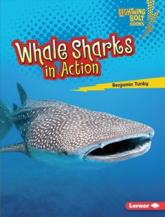 Whale Sharks in Action